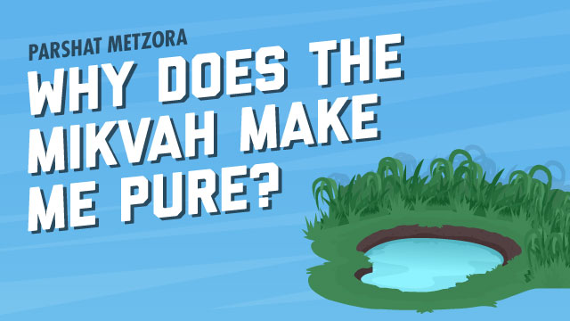 Why Does The Mikvah Make Me Pure?